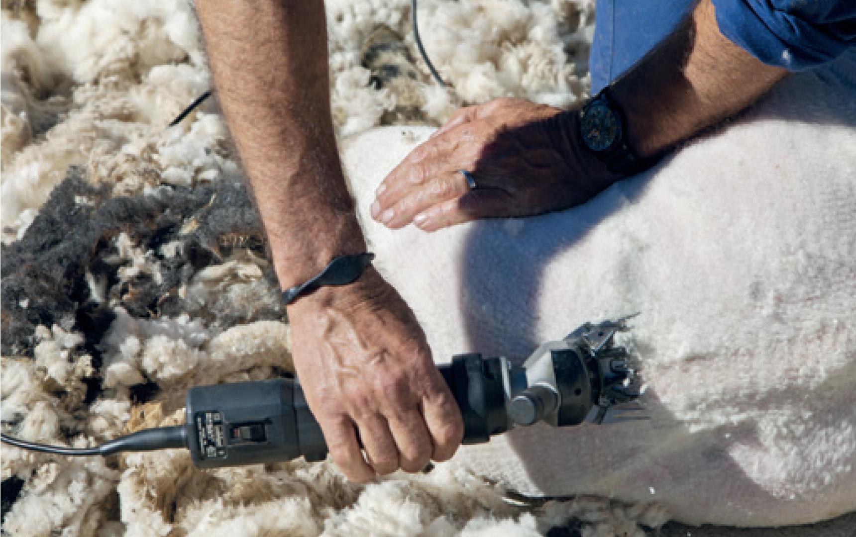 Lavalan's 2020 Eco Textiles